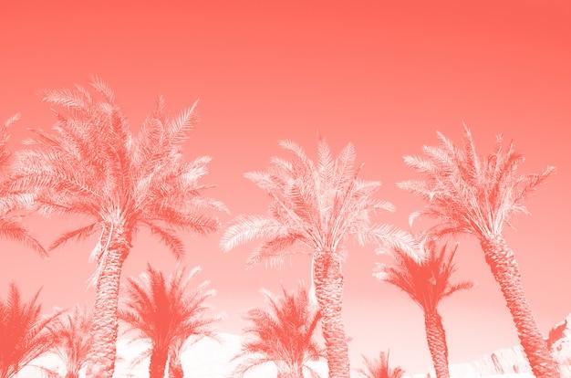 Palmeras tropicales sobre el cielo de color coral. concepto de verano y viajes.