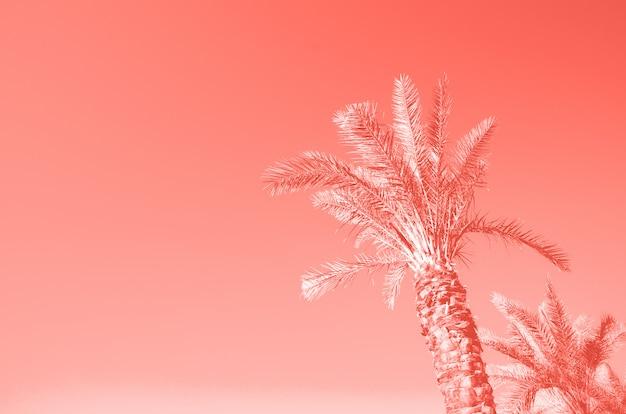 Palmeras de verano sobre el cielo de color coral. concepto de vacaciones y viajes. copia espacio