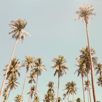 Palmeras en el verano