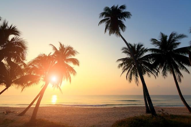Palmeras y cielo nublado increíble en la salida del sol en la isla tropical en el océano índico