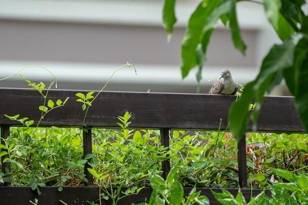 La paloma se aferra a la valla de acero marrón con un árbol y una hoja alrededor.