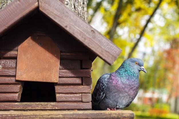 Paloma se sienta en una casa de aves en un árbol en un bosque de verano.