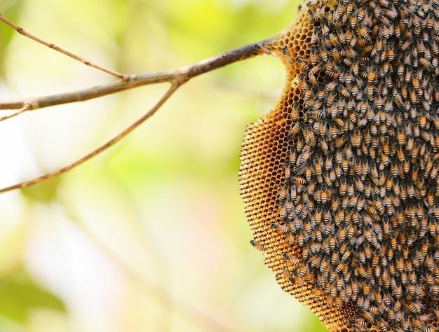Panal en la naturaleza del árbol y enjambre de abejas en el panal