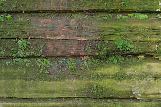 Paneles de madera verde grunge