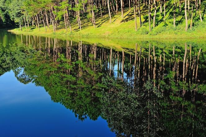Pang ung park, reflejo del árbol de pino en un lago, meahongson, tailandia