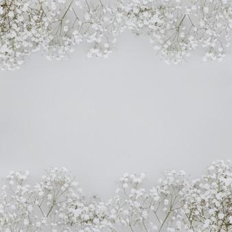 Paniculata flores sobre fondo gris con copyspace en el medio