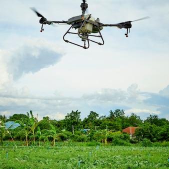 Panorama de la agricultura drone volar a fertilizantes rociados en el campo kale, el agricultor inteligente utiliza drone concepto de tecnología inteligente