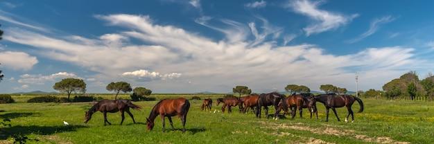 Panorama con caballos pastando en un prado verde