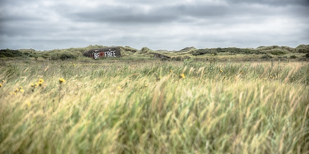 Panorama de espiga de trigo que crece en medio de un campo bajo el cielo nublado en el campo
