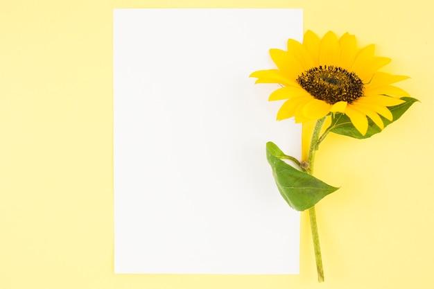 Papel en blanco blanco con girasol hermoso sobre fondo amarillo