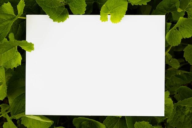 Papel blanco en blanco rodeado de hojas verdes.