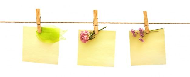 Papeles y flores con pinzas para la ropa en blanco