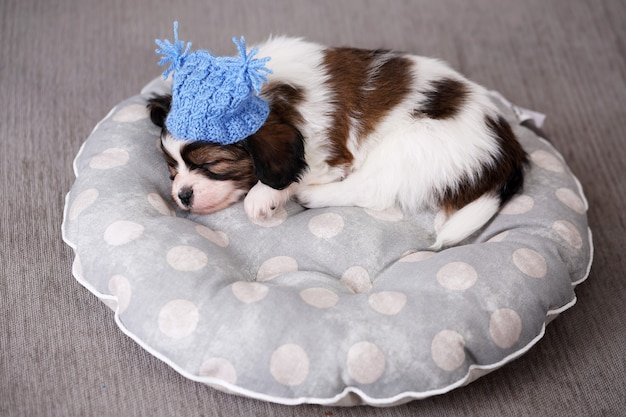 Papillon cachorro de raza pequeña durmiendo dulcemente en la almohada