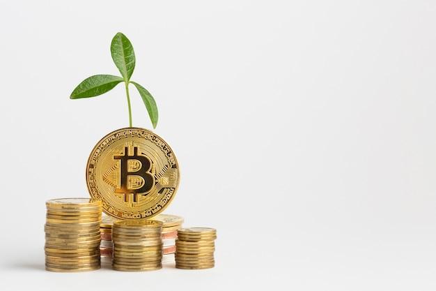 Paquete de bitcoin con planta