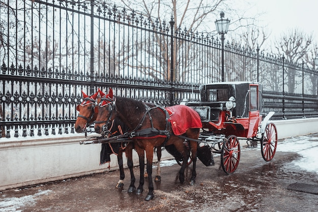 Par de hermosos caballos en un arnés rojo enganchado a un viejo carro rojo