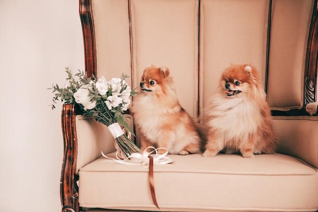 Par de perros lindos sentados en el trono de la boda