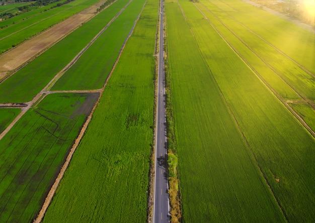 Parcelas agrícolas de diferentes cultivos con carretera.