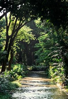 Parche a través de un bosque verde