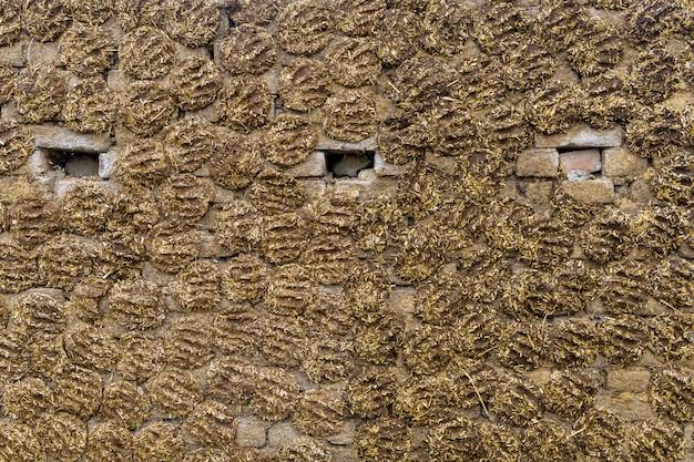 La pared de la casa está hecha de estiércol en el fondo de la india