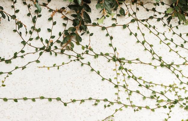Pared exterior con varias hojas.