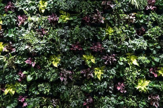 Pared de hierbas, pared de plantas, papel tapiz verde natural y fondo. muro de la naturaleza.