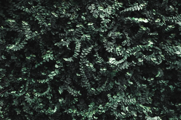 Pared de hojas verde oscuro.