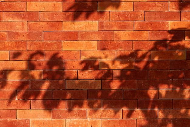Pared de ladrillo antiguo con sombras de hojas