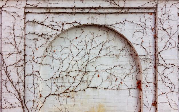 Pared de ladrillo blanco con arco cubierto de plantas trepadoras