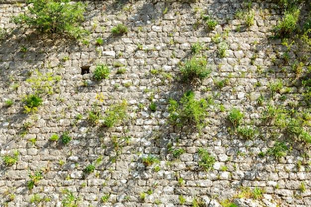 Pared de ladrillo gris con pasto verde