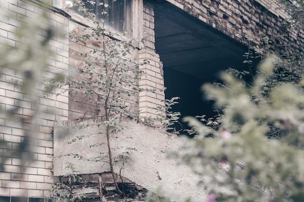 Pared de ladrillo y hormigón gris parcialmente borrosa del edificio en ruinas abandonado cubierto de árboles, arbustos, musgo y ramas verdes