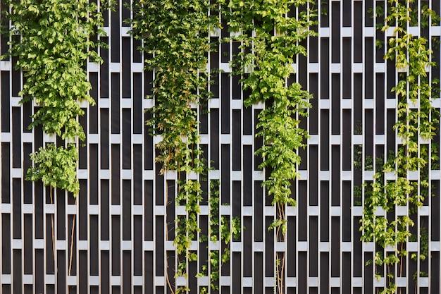 Pared de metal en forma de rejilla rectangular que cubre con plantas en crecimiento