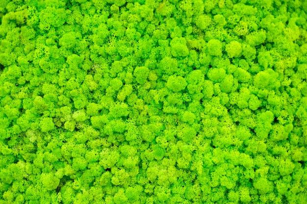 Pared de musgo de reno, decoración de pared verde hecha de liquen de reno