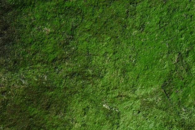 Pared de musgo verde