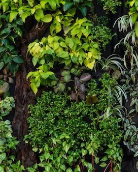 Pared vertical del jardin