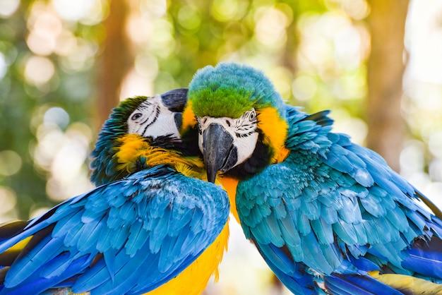 Pareja de aves en rama de árbol en la naturaleza