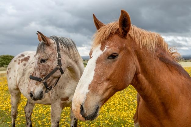 Pareja de caballos en un día soleado