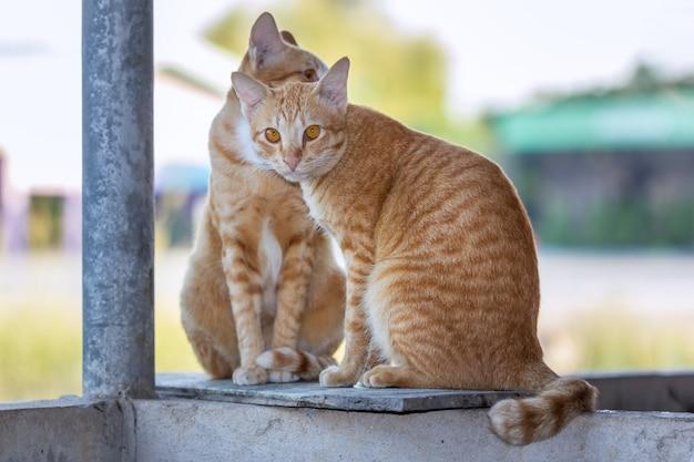 Pareja de gatos disfrutando al aire libre
