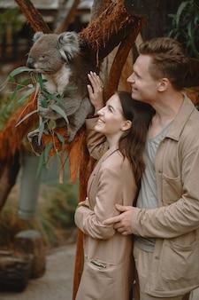 Pareja en la reserva está jugando con un koala