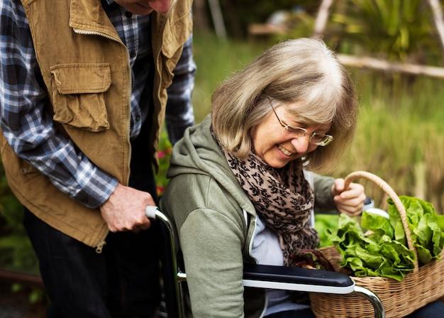 Pareja senior plantar verduras en el jardín patio trasero