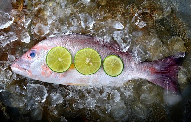 Pargo rojo pescado del mercado pesquero.