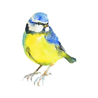 Paro acuarela. pájaro dibujado a mano en blanco