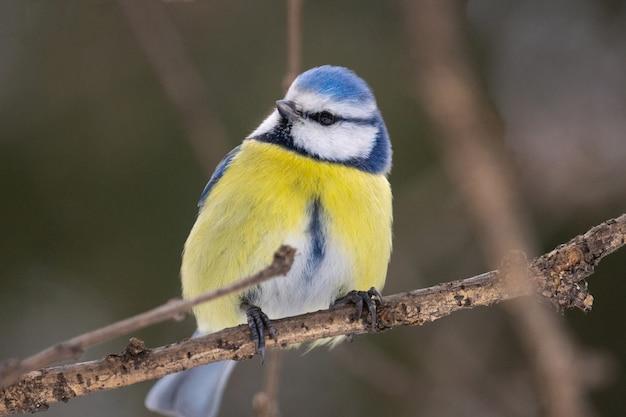 El parque de aves en invierno.