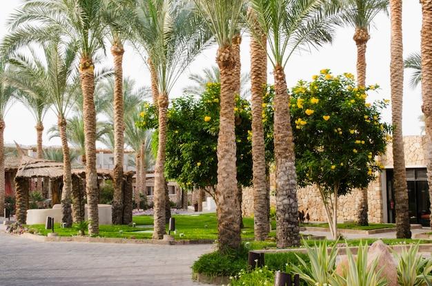 Parque bien cuidado con palmeras y cactus.