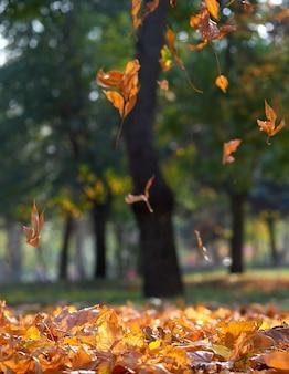 Parque de la ciudad de otoño con árboles y hojas secas de arce amarillo en el suelo, ucrania kherson