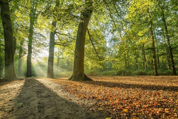 Parque cubierto de árboles bajo la luz del sol