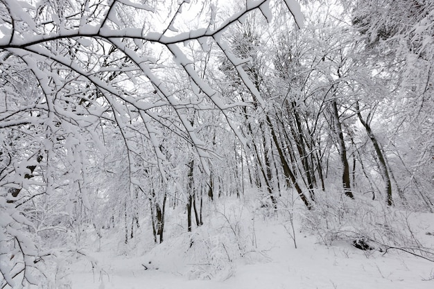 Un parque con diferentes árboles en la temporada de invierno.
