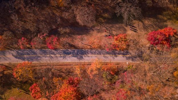 Parque nacional coreano en otoño