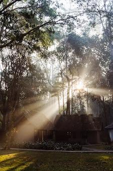 Parque nacional en tailandia con bungalows para acampar. impresionante luz de la mañana entre altos árboles. naturaleza, trekking y turismo en asia.