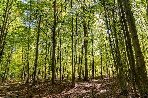 Parque natural de montseny en otoño.
