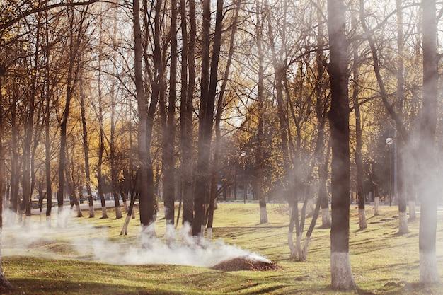 Parque de otoño donde se queman las hojas. contaminación por hidrocarburos